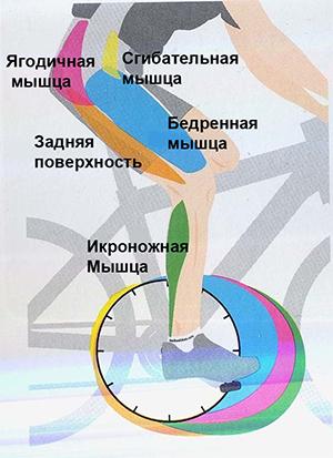 велотренажер мышцы