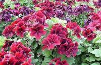 красивые цветы для сада цветущие все лето фото и названия