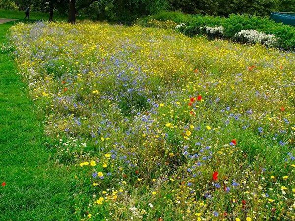 мавританский газон фото 18