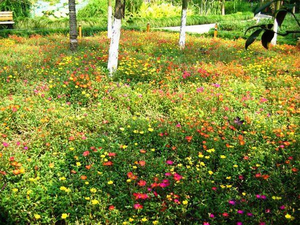 мавританский газон фото 2
