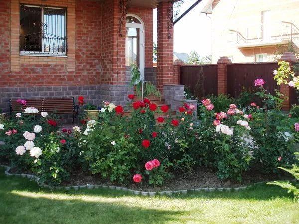 фото клумб с розами
