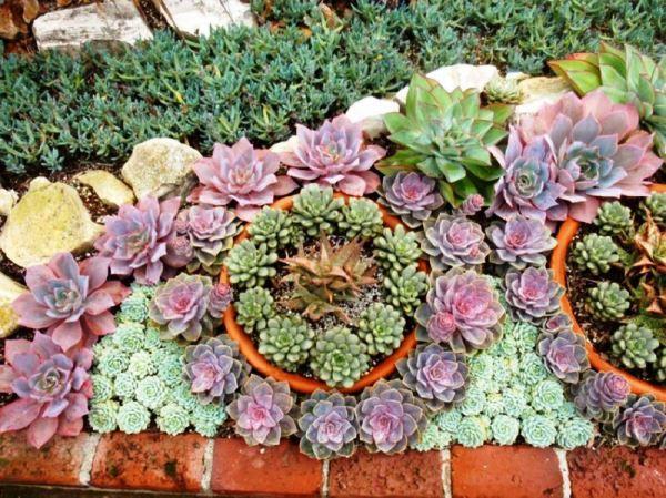 садовые цветы фото 11