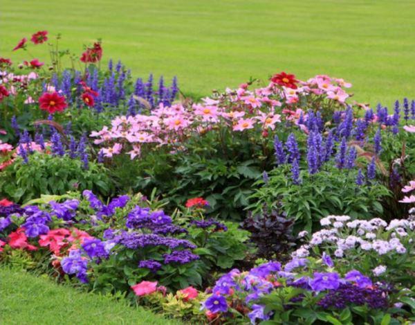 садовые цветы фото 2