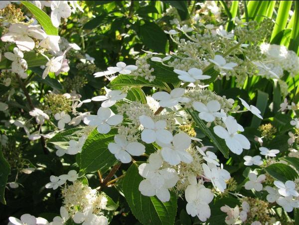 вьющиеся растения для сада фото 10