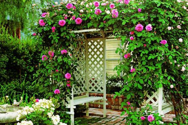 вьющиеся растения для сада фото 2