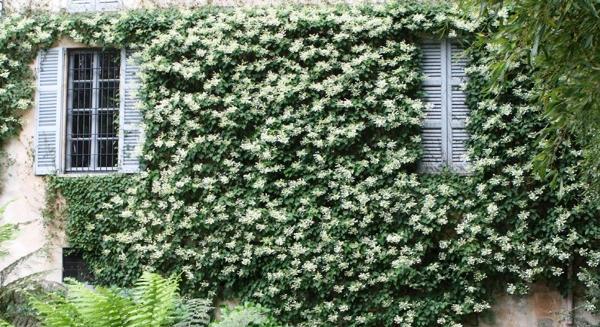 вьющиеся растения для сада фото 9