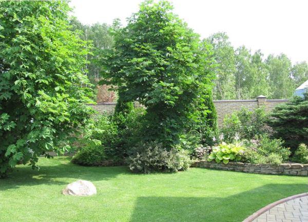 декоративные деревья фото 13