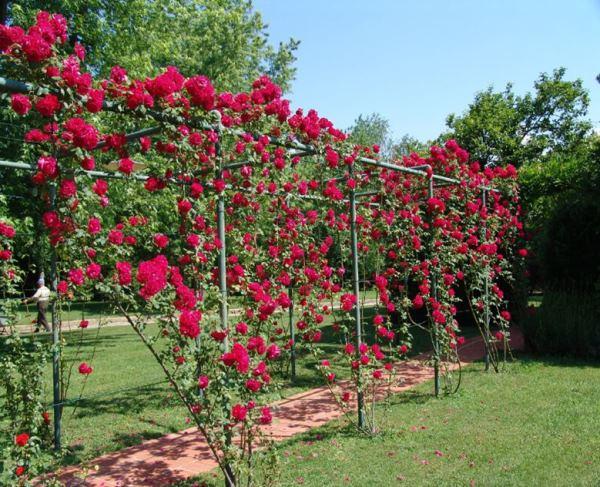Шпалера для розы плетистой своими руками фото