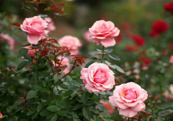 бордюрные цветы фото 12