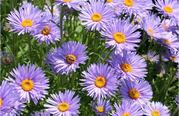 бордюрные цветы фото 9