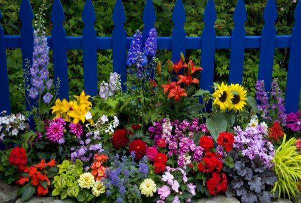 цветы в палисаднике фото 2