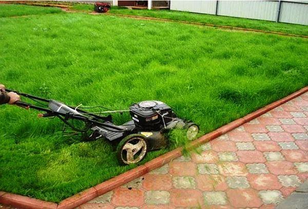 рулонный газон фото 12