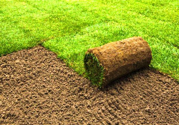 рулонный газон фото 2