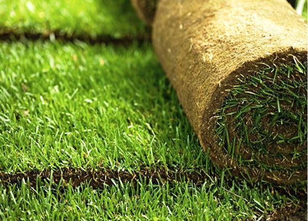 рулонный газон фото 3