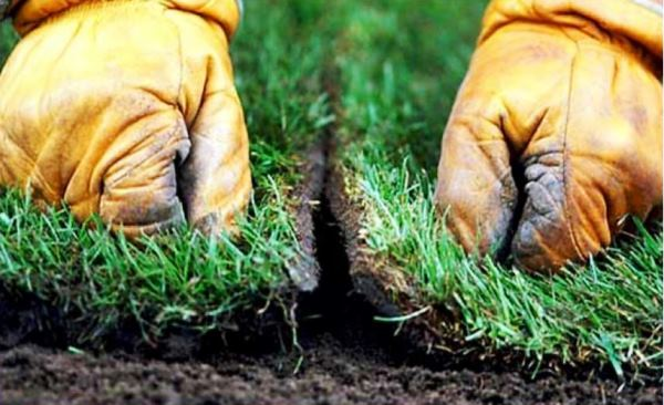 рулонный газон фото 7