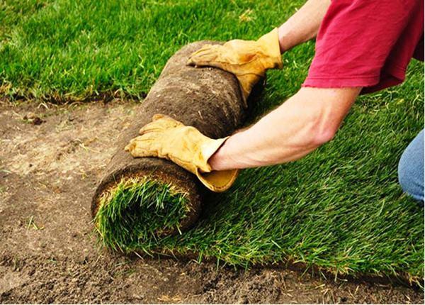 рулонный газон фото 8