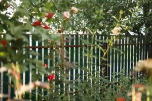 забор из штакетника фото 22