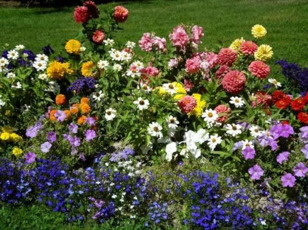низкорослые цветы для клумбы фото 25