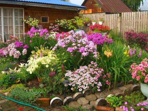 низкорослые цветы для клумбы фото 26