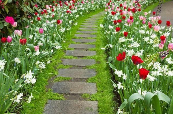 Цветы для рабатки фото и названия