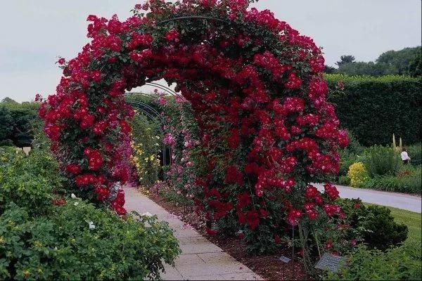 арка для розы своими руками фото