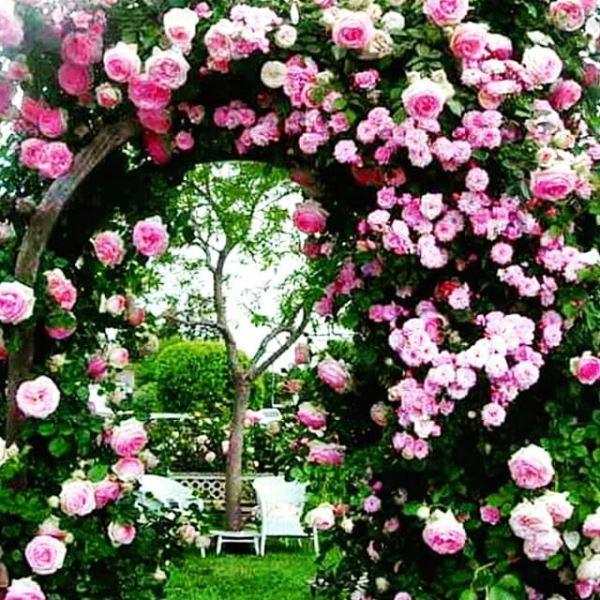 арка для розы своими руками фото 25