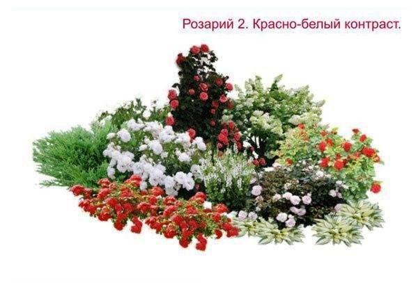 розарий на даче своими руками фото 3