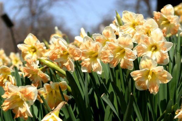 садовые цветы фото 10