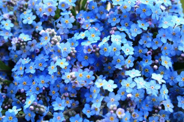 садовые цветы фото 12