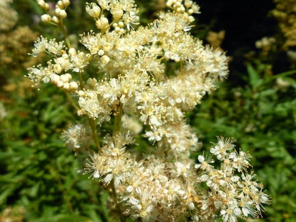 садовые цветы цветущие все лето фото 10