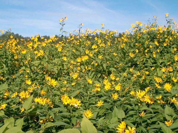 садовые цветы цветущие все лето фото 13