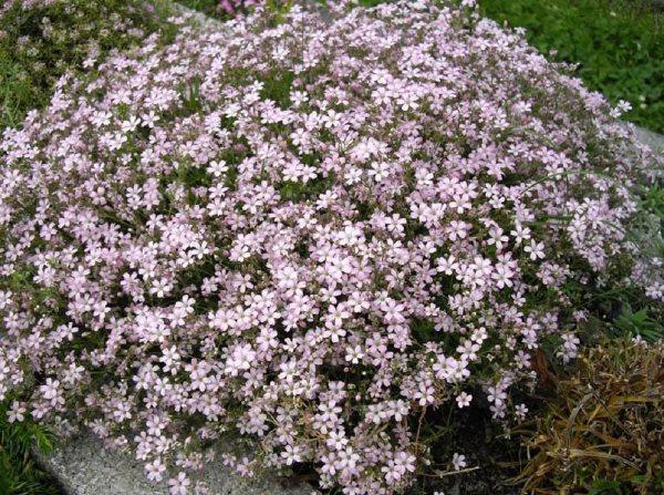 садовые цветы цветущие все лето фото 14