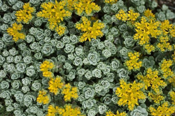 садовые цветы цветущие все лето фото 16