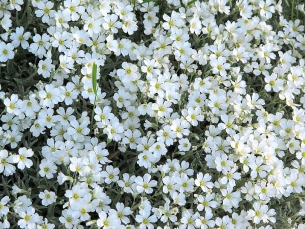 садовые цветы цветущие все лето фото 17