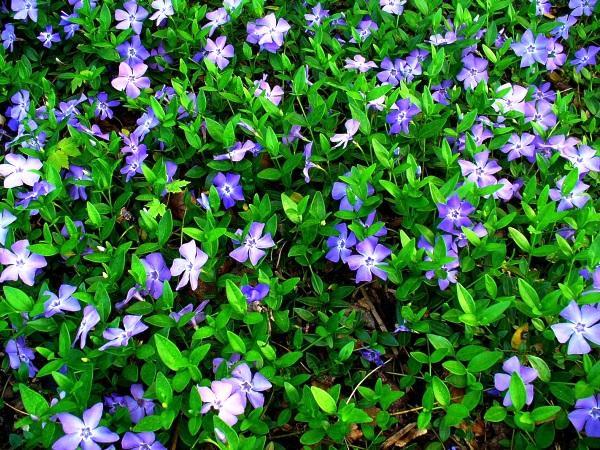 садовые цветы цветущие все лето фото 18