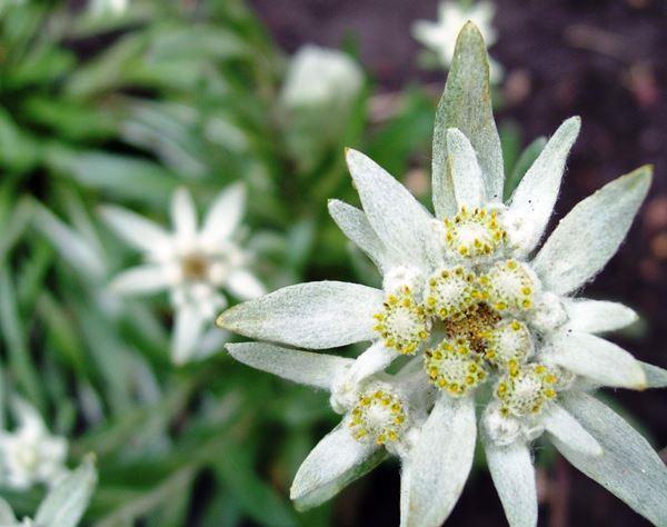 садовые цветы цветущие все лето фото 19