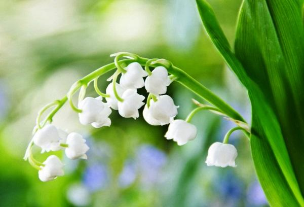 садовые цветы цветущие все лето фото 20