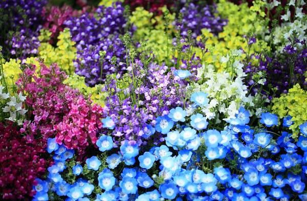 Садовые цветы цветущие все лето фото 21
