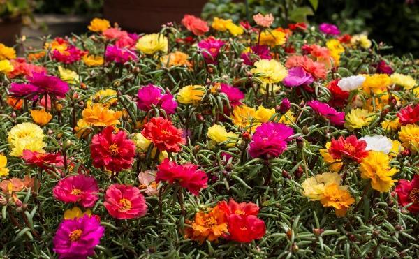 садовые цветы цветущие все лето фото 3