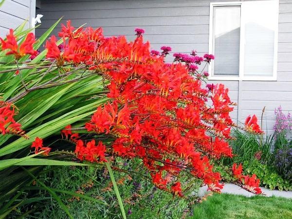 садовые цветы цветущие все лето фото 5