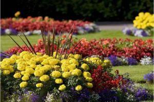 садовые цветы цветущие все лето фото и названия