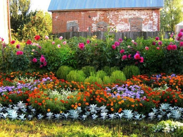 Красивые цветы для сада многолетние цветущие все лето фото и названия