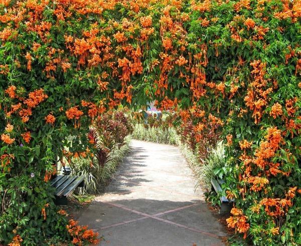 вьющиеся растения для сада фото 14