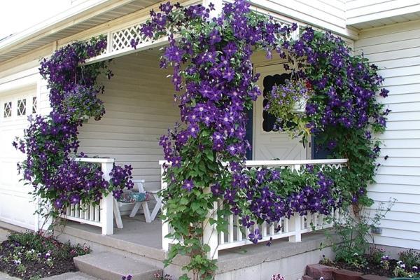 вьющиеся растения для сада фото 6