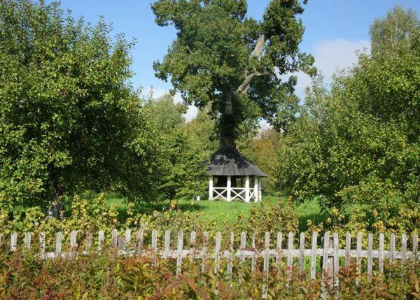 Декоративные деревья для дачи фото и названия