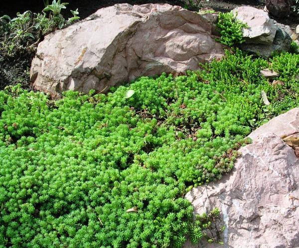 травы для сада фото 2