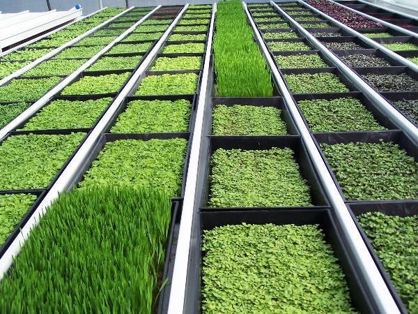 Декоративные травы для клумбы названия и фото