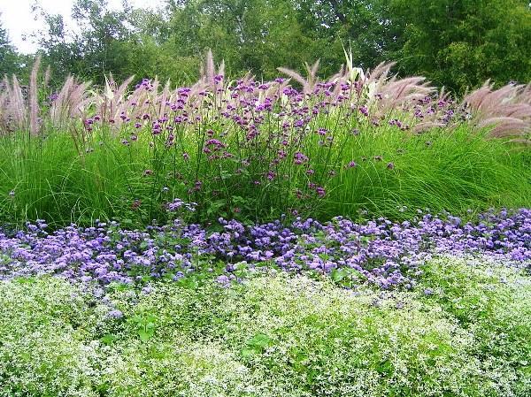 Декоративные травы для сада фото