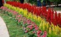 бордюрные цветы многолетние низкорослые фото и название