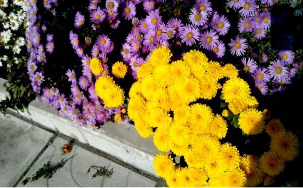 бордюрные цветы фото 11